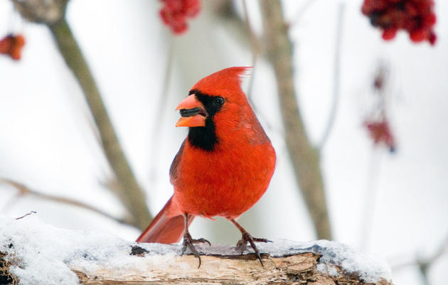 Introduction to the Christmas Bird Count Workshop