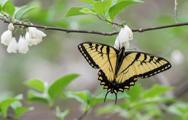 Butterfly House and Native Plant Garden Coming Spring/Summer 2019