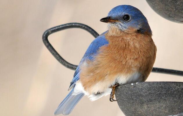 Bird Seed Sale 2021