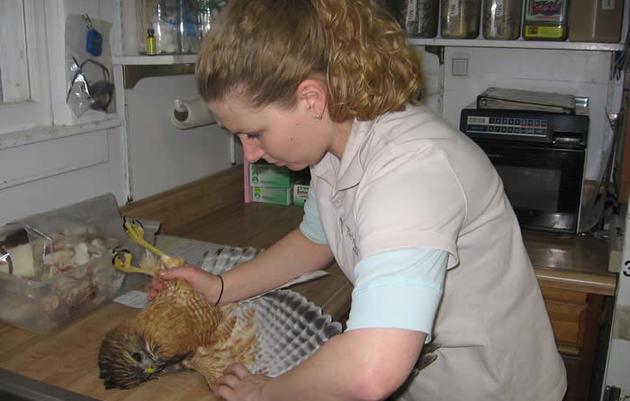 Wildlife Rehabilitation Clinic
