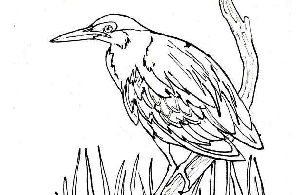 Green Heron Coloring Page