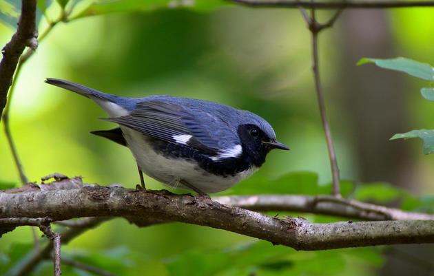 Pasquariello Audubon Sanctuary