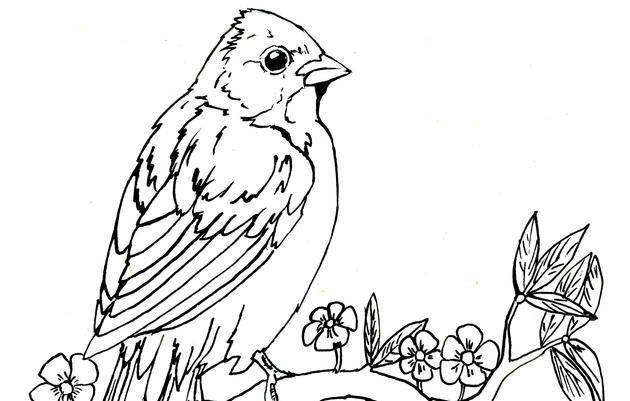 Painted Bunting Coloring Page