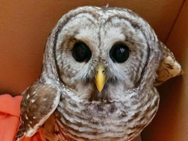 Sharon Wildlife Rehabilitation Clinic Loses Food Source