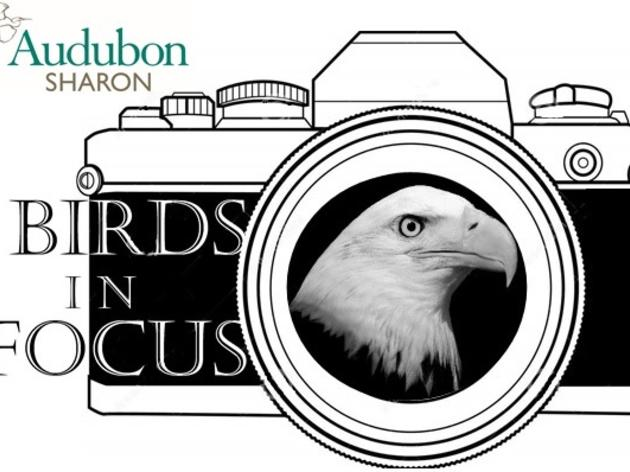 Birds in Focus Photography Event