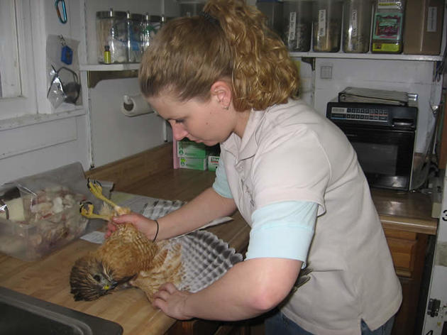 Wildlife Rehabilitation Clinic