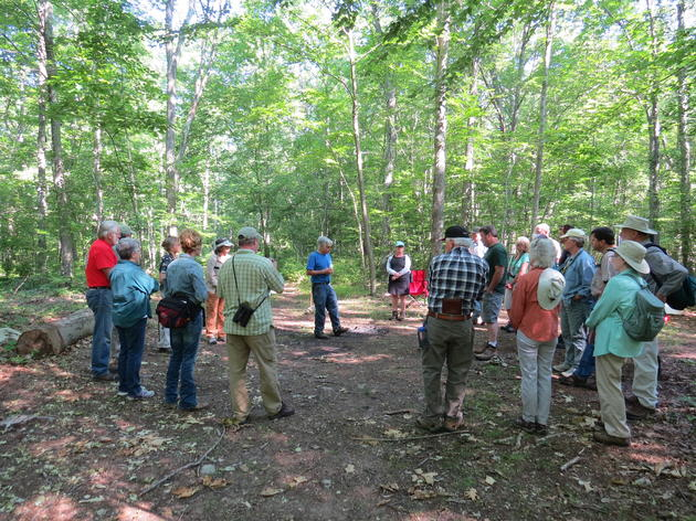 Improving the Quality of Connecticut's Forests for Birds and Wildlife