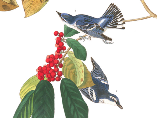 Wild and Beautiful Creatures: The Life and Work of J.J. Audubon