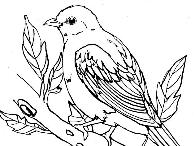 Scarlet Tanager Coloring Page
