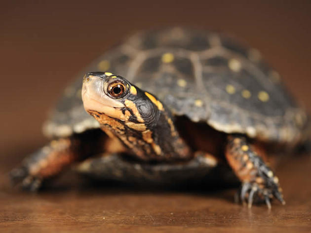 Reptile Curator