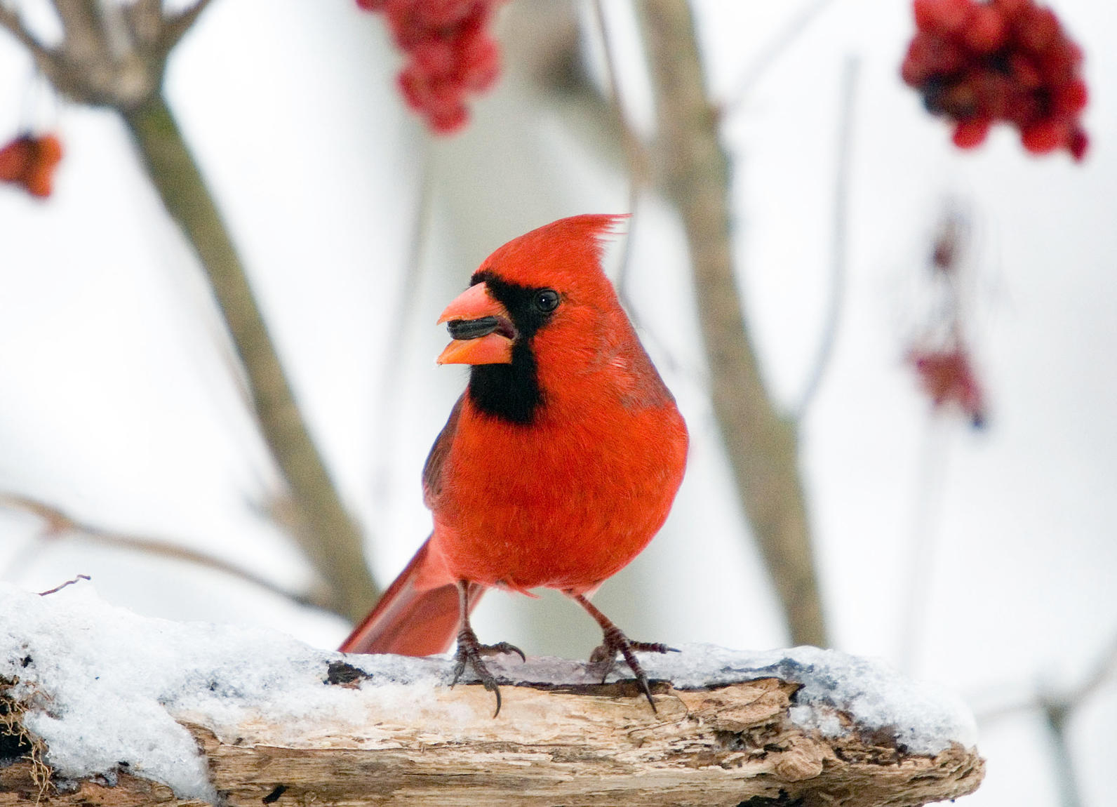 christmas bird count audubon sharon